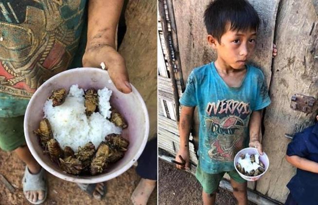 Thực hư thông tin 4 đứa trẻ chia nhau bát cơm ăn chung với xác ve sầu-1