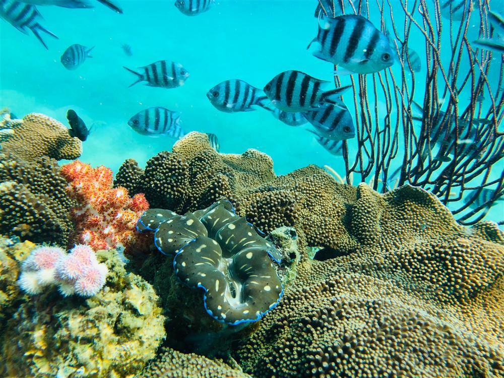 Hè này tít mít tại Phú Quốc, nghe chuyên gia du lịch trải nghiệm lặn biển ngắm san hô-2