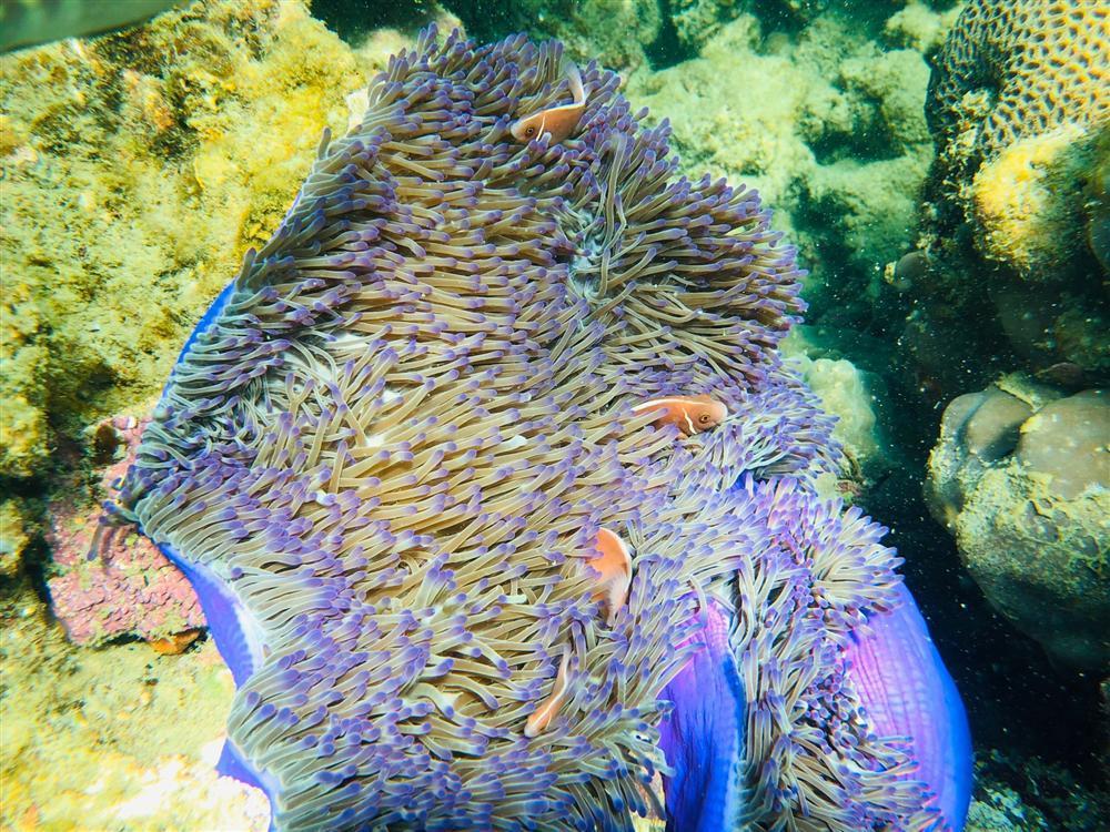 Hè này tít mít tại Phú Quốc, nghe chuyên gia du lịch trải nghiệm lặn biển ngắm san hô-3
