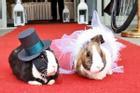Ông chủ tổ chức 'đám cưới thỏ' gây sốt MXH trong khách sạn mùa covid-19 vắng như nghĩa trang