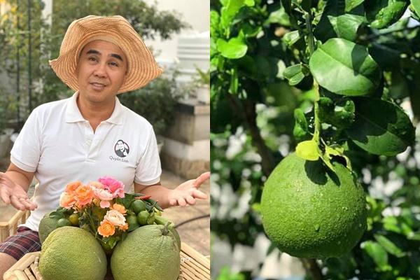 Nhà vườn rộng rãi tràn ngập cây trái của sao Việt-1