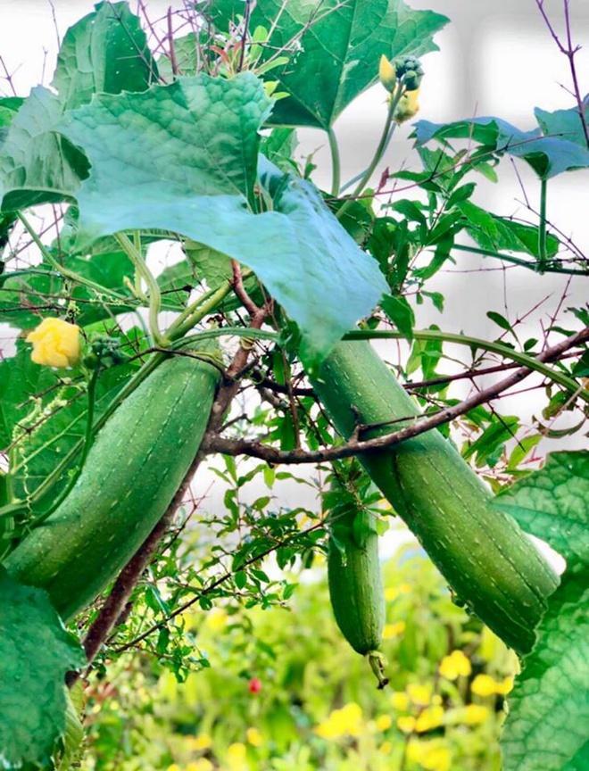 Nhà vườn rộng rãi tràn ngập cây trái của sao Việt-4