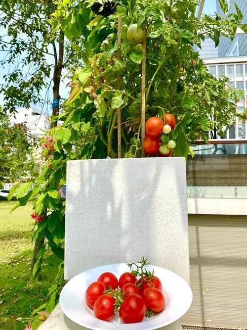Nhà vườn rộng rãi tràn ngập cây trái của sao Việt-13