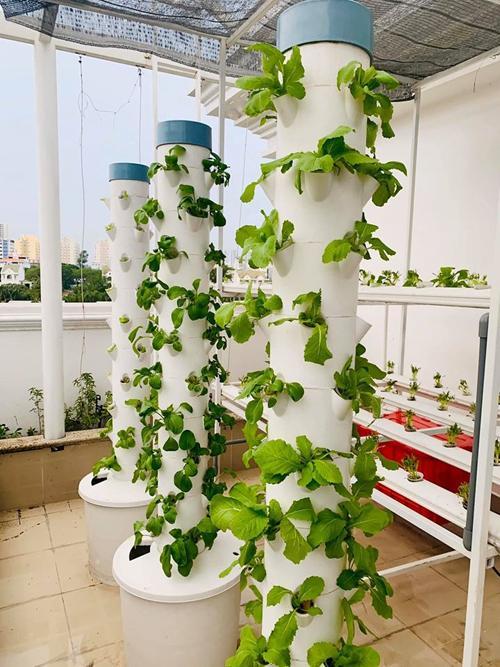 Nhà vườn rộng rãi tràn ngập cây trái của sao Việt-19