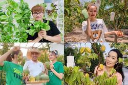 Nhà vườn rộng rãi tràn ngập cây trái của sao Việt