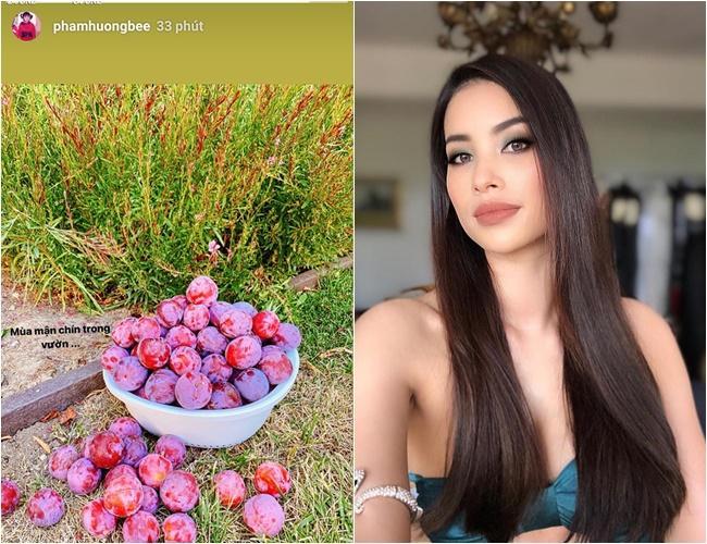 Phạm Hương mở lại Instagram, chỉ đăng ảnh hoa quả chứ không khoe mặt - ảnh 1