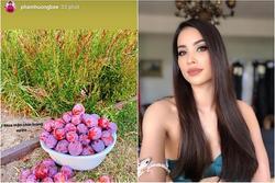 Mở lại Instagram, Phạm Hương chỉ đăng ảnh hoa quả chứ không khoe mặt