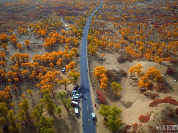 Ngất ngây con đường rừng xanh lá đỏ trên nền cát trắng đẹp như tranh-3