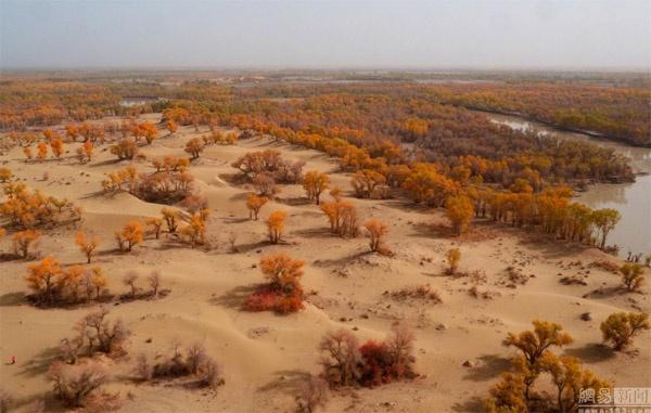 Ngất ngây con đường rừng xanh lá đỏ trên nền cát trắng đẹp như tranh-7