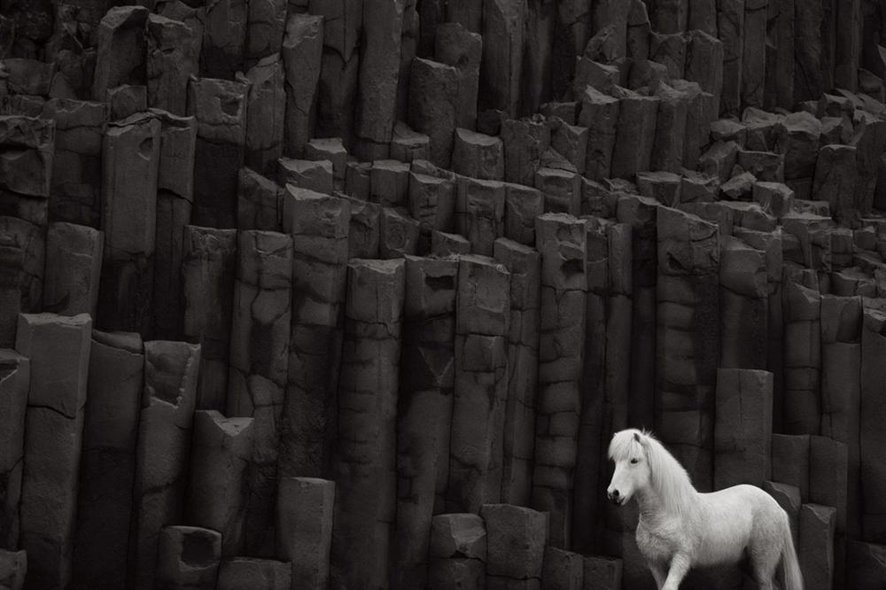 Loài ngựa thần thoại sống tách biệt 1.000 năm trên băng đảo-7