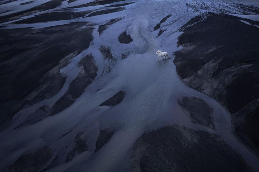 Loài ngựa thần thoại sống tách biệt 1.000 năm trên băng đảo-6