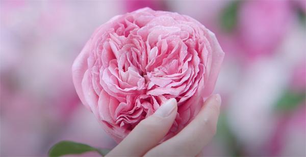 Sữa rửa mặt NIVEA Hokkaido Rose - dịu nhẹ nâng niu làn da-1