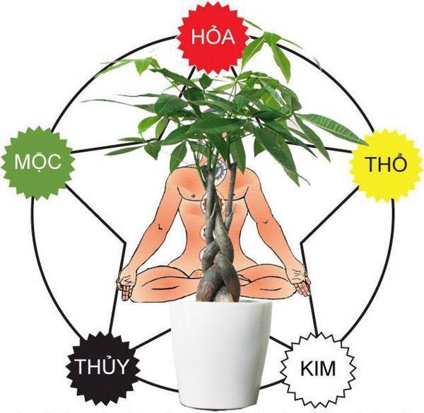 Loại cây thường thấy có tác dụng hút tiền trong phong thủy lại còn đuổi được muỗi-4