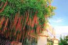 Dân mạng thi nhau khoe hoa lộc vừng rụng đỏ sân, đẹp như trong phim Hàn Quốc