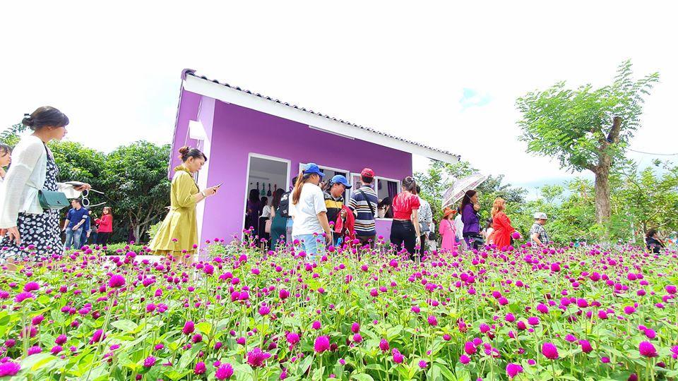 Dân mạng lùng sục căn nhà màu tím mộng mơ ở Cần Thơ-7