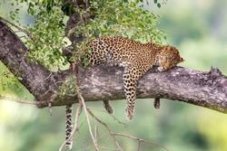 Lãnh địa hiếm hoi của động vật hoang dã trên thế giới