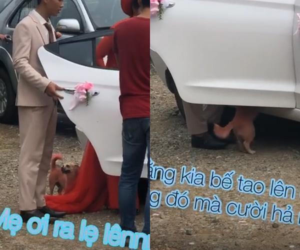 Chủ đi lấy chồng, chú chó lẽo đẽo chạy theo nhưng phản ứng của cô dâu mới chú ý-1