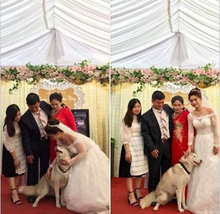 Chủ đi lấy chồng, chú chó lẽo đẽo chạy theo nhưng phản ứng của cô dâu mới chú ý-2