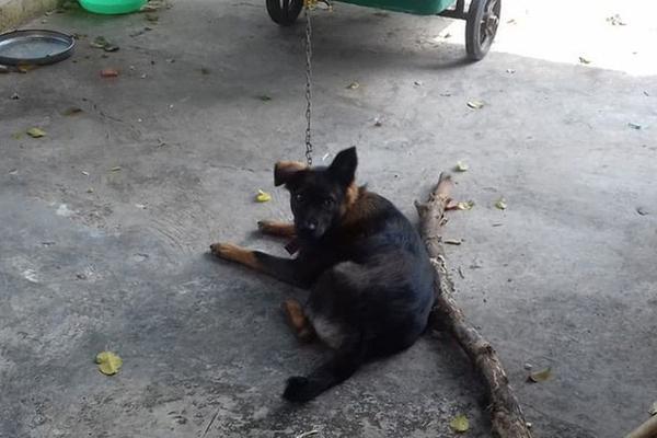 Hy hữu: Chú chó bị 2 gia đình tranh chấp quyền nuôi dưỡng, tăng cân vù vù khi bị tạm giữ tại trụ sở công an-1