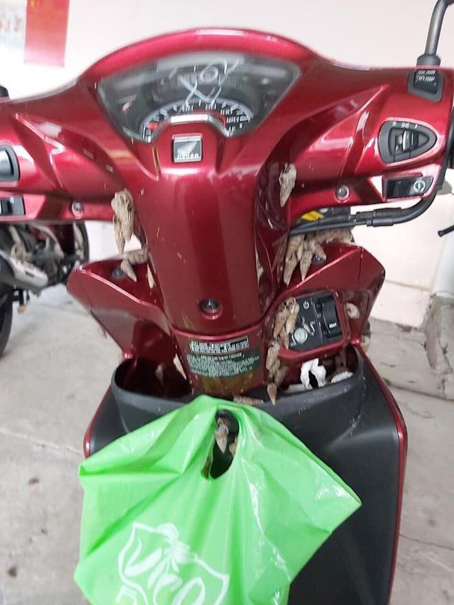 Chạm tay vào xe máy, cô gái giật mình với những thứ đáng sợ bám chi chít-1