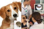 Biểu cảm hớn hở của chú chó vào ngày chủ kết hôn gây bão mạng xã hội, lý do khiến ai cũng gật gù-4