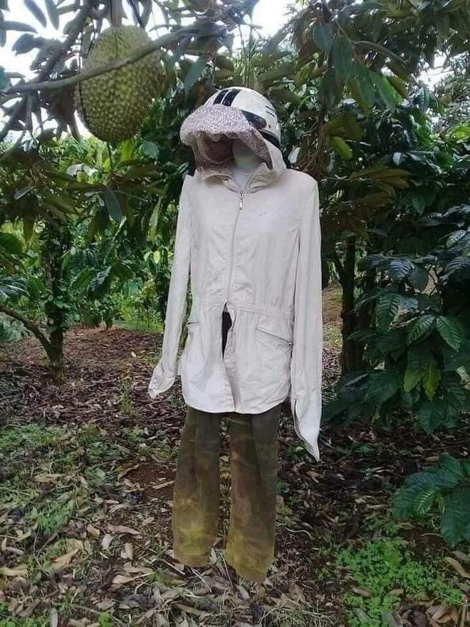 Sợ bị trộm sầu riêng, chủ vườn có cách bảo vệ khiến ai nấy đều kinh hãi-1
