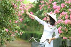 Giới trẻ xao xuyến trước con đường hoa tường vi lãng mạn như ngôn tình giữa lòng Hà Nội