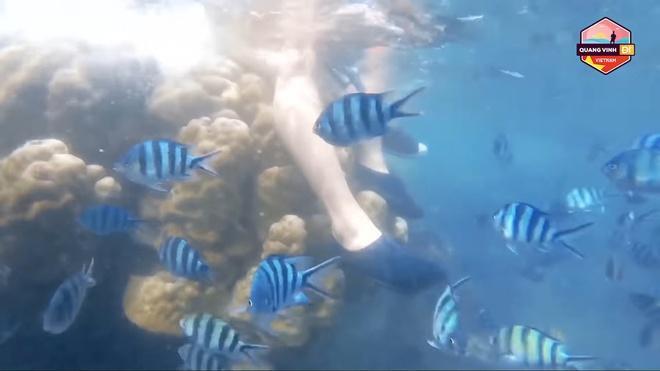 Phạm Quỳnh Anh xin lỗi vì ngồi lên san hô: Sai là sai, không bào chữa-2