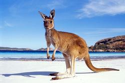 Bạn có thể phải chờ đến năm 2021 mới có thể du lịch Australia