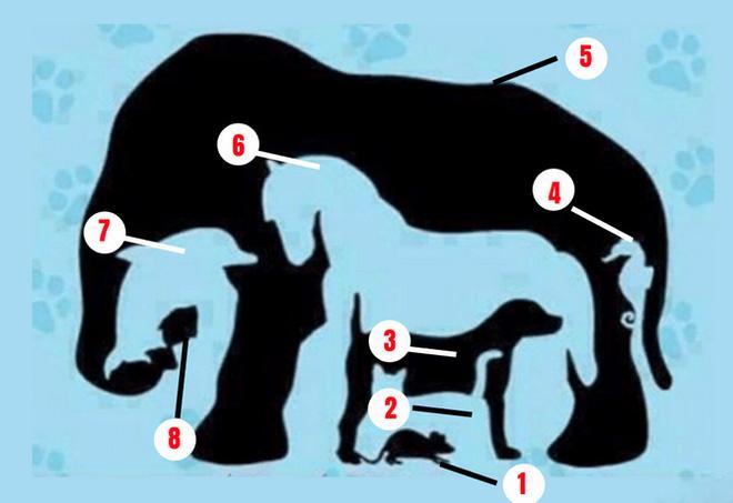 Phải rất tinh mắt mới nhìn thấy đủ 8 con vật trong bức tranh ảo giác-2
