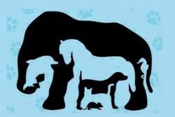 Phải rất tinh mắt mới nhìn thấy đủ 8 con vật trong bức tranh ảo giác