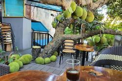 Truy lùng quán 'cà phê mít' ở Tuyên Quang, nghe tên đã thấy thơm lừng