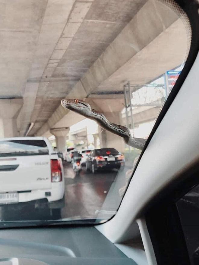 Đang lưu thông trên đường, chủ xe mất hết hồn vía khi thấy bé Na đu bám ngay sát cửa-1