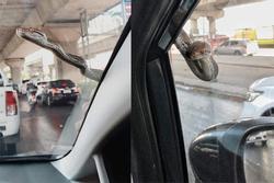 Đang lưu thông trên đường, chủ xe mất hết hồn vía khi thấy 'bé Na' đu bám ngay sát cửa