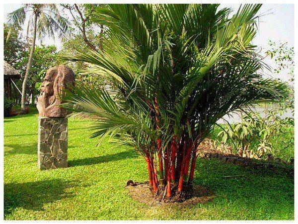 7 loại cây cảnh trồng trước cửa nhà giúp tài vận lên cao, gia chủ yên tâm hưởng phúc-1