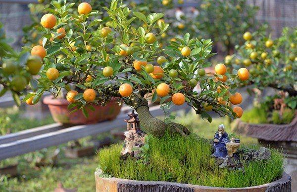 7 loại cây cảnh trồng trước cửa nhà giúp tài vận lên cao, gia chủ yên tâm hưởng phúc-2