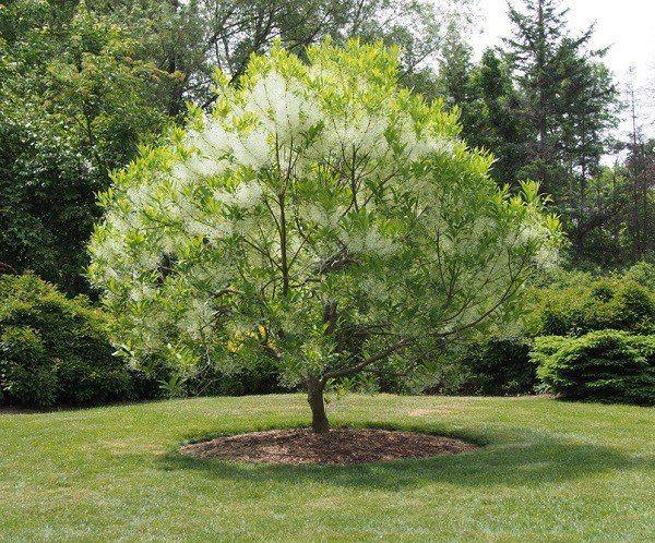 7 loại cây cảnh trồng trước cửa nhà giúp tài vận lên cao, gia chủ yên tâm hưởng phúc-4