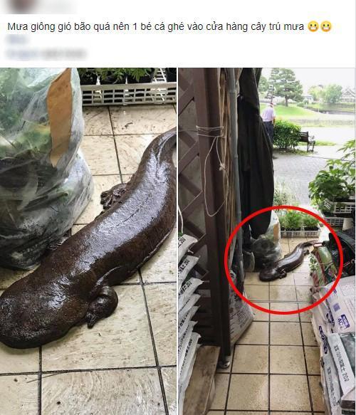 Đến tận cửa hỏi thăm nhà dân sau trận mưa lớn, chú cá kỳ lạ khiến dân mạng tranh cãi: Đây là cá trê đại bự phiên bản mọc chân?-1