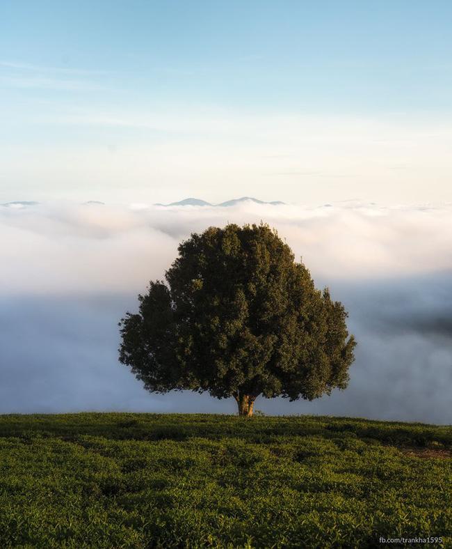 Đổ xô check-in cây thông mập ú chơi vơi giữa mây trời Đà Lạt, nghe đồn khi đi lẻ bóng khi về có đôi!-2