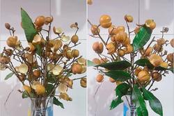 Thanh niên cứng làm hoa nhãn sáng tạo hết phần thiên hạ khiến cao thủ cũng 'xin quỳ'
