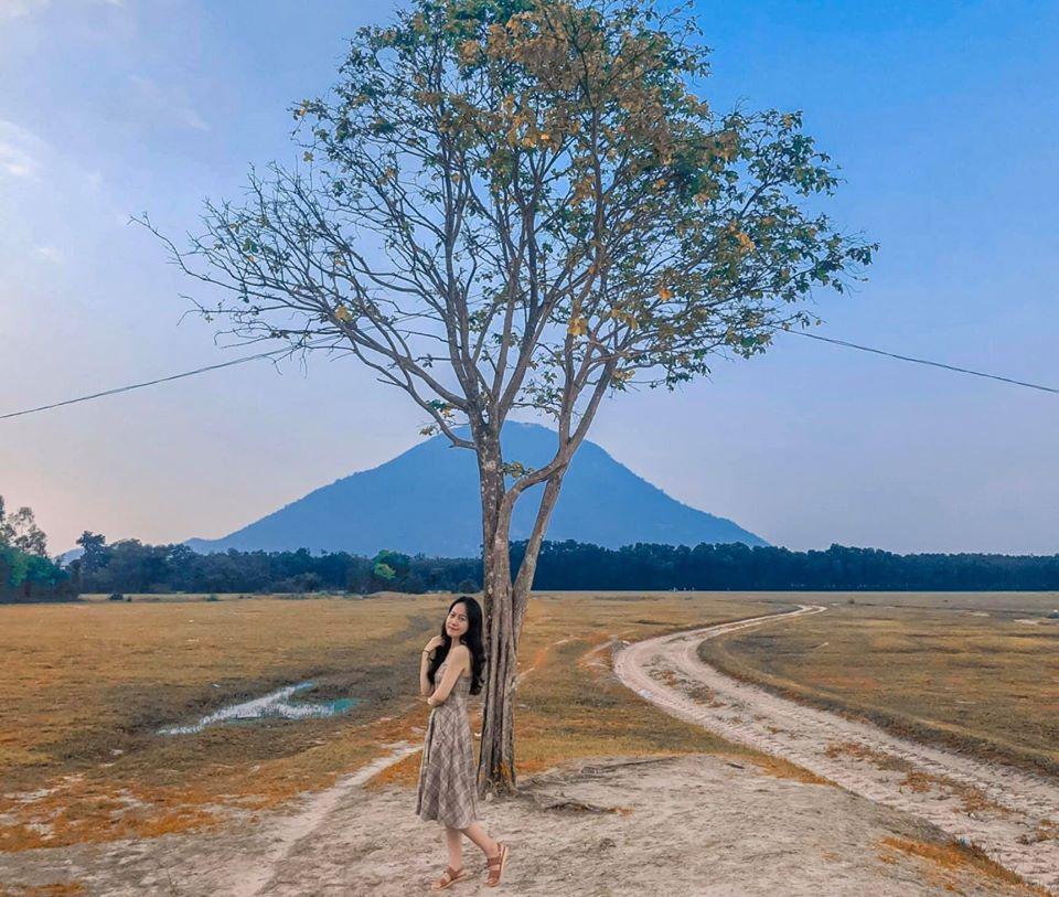 Không đến được Đà Lạt vẫn check-in cháy máy cây cô đơn ở ngay Hà Nội-10