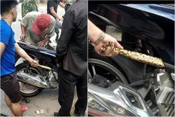 Hú hồn cảnh tượng giải cứu 'bé Na' béo ú bị mắc kẹt trong động cơ xe máy