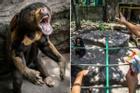 Thảo Cầm Viên bị tố bỏ đói động vật, dân mạng lên tiếng bảo vệ