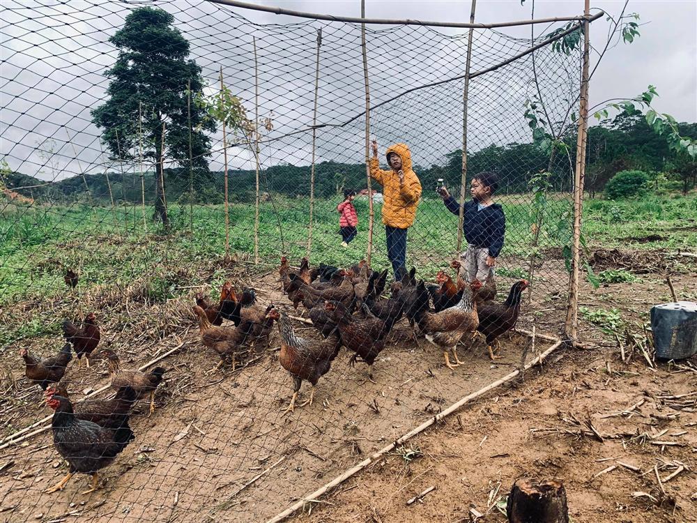 Trang trại lộng gió ở quê của gia đình Lý Hải - Minh Hà-5
