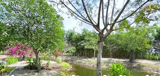 Choáng ngợp với miệt vườn thẳng cánh cò bay của dàn sao Việt-7