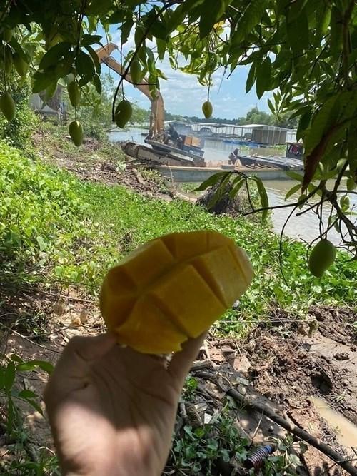 Choáng ngợp với miệt vườn thẳng cánh cò bay của dàn sao Việt-16