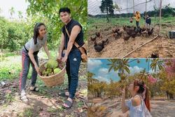 Choáng ngợp với miệt vườn 'thẳng cánh cò bay' của dàn sao Việt