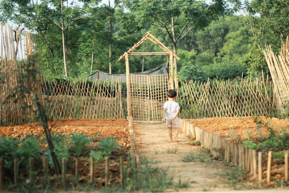 Nữ thiết kế bỏ Hà thành phố thị về quê xây ngôi nhà biển xanh, ngày ngày trồng rau nuôi cá-13