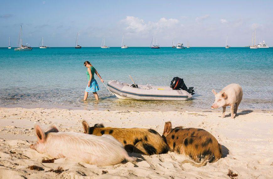 Đảo mèo, làng cáo và loạt vùng đất trên thế giới bị động vật chiếm giữ-1