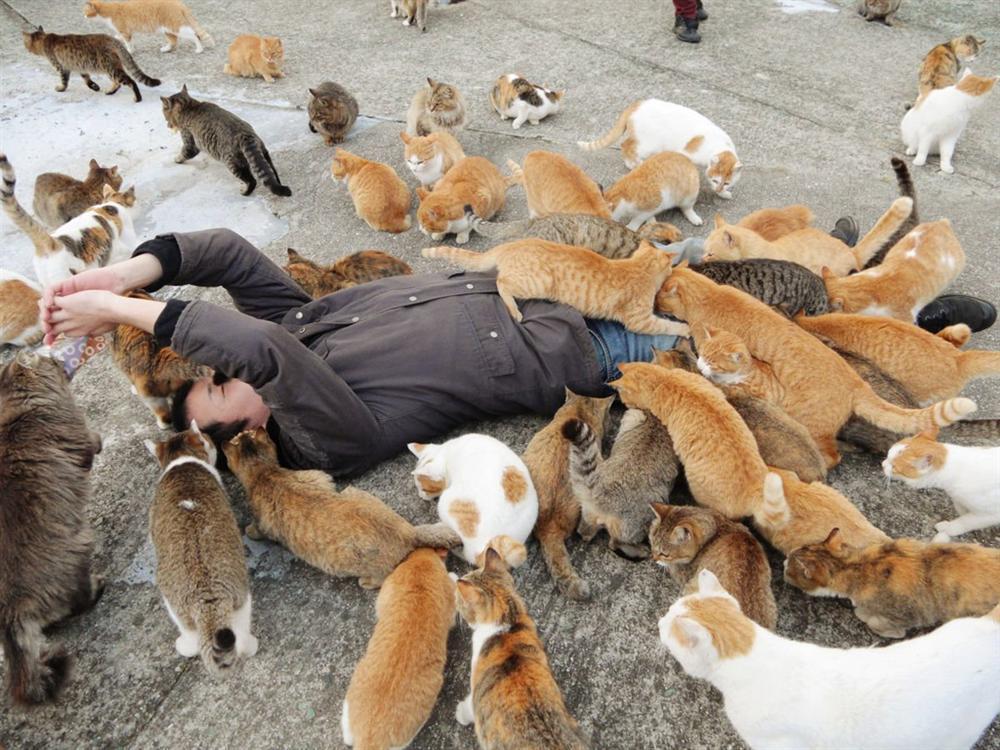 Đảo mèo, làng cáo và loạt vùng đất trên thế giới bị động vật chiếm giữ-2